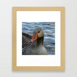 Greylag Goose, Anser anser, Graugans Framed Art Print