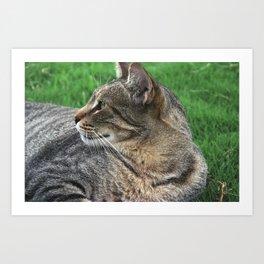 Serene Cat Art Print