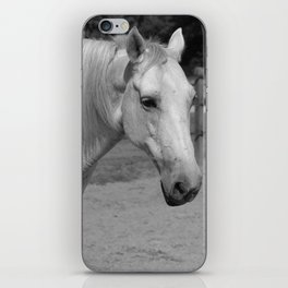 Horse In Black And White iPhone Skin