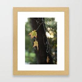 Leaves in last light Framed Art Print