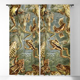 Ernst Haeckel Batrachia 1904 Poster Blackout Curtain