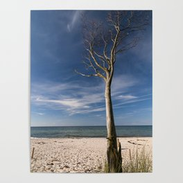 storm-tossed tree at the sea - Beach Ocean Poster
