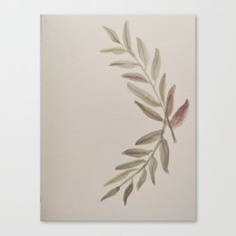 Olive Branch Leaves Canvas Print