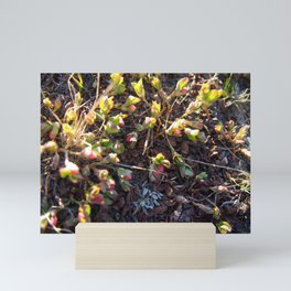 Spring in the Sierras - Nature and Landscape Photography Mini Art Print