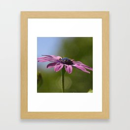Macro Shot Of A Purple Osteospermum Framed Art Print