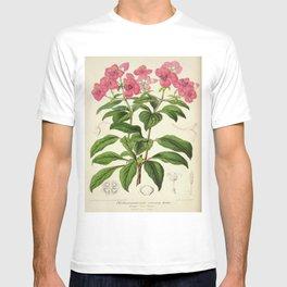 Heterocentron Roseum Vintage Botanical Floral Flower Plant Scientific T-shirt