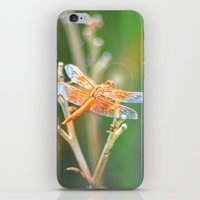 dragonfly iPhone & iPod Skins featuring Dragonfly by Lisa Argyropoulos