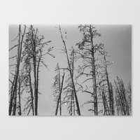 montana Canvas Prints featuring Montana by Caitlin Elizabeth Brookins
