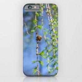 Young larch - Nature photography iPhone Case