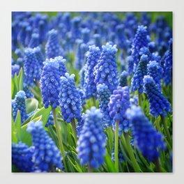 Blue Hyacinths Canvas Print