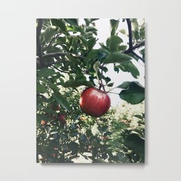 Crisp Apple Metal Print