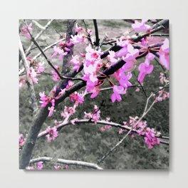 Redbud Tree in March Metal Print