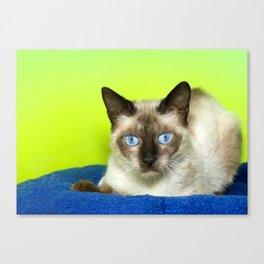 Vibrant Portrait of a blue eyed Siamese Cat Canvas Print