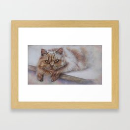 Cattitude - Long Haired Cat Staring at You Framed Art Print