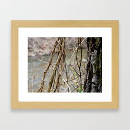 Growth by the river Framed Art Print