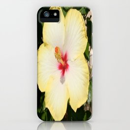 Pale Yellow Hibiscus Flower - Front View  iPhone Case