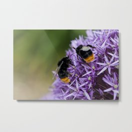 Fighting Bumble Bees Metal Print
