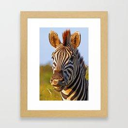 Smiling Zebra, Africa wildlife Framed Art Print