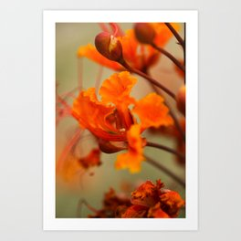 Orange & Red Art Print