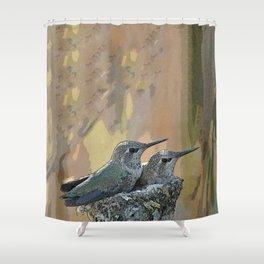 Pair of Anna's Hummingbird Fledglings Shower Curtain