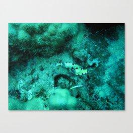 Mollusk Canvas Print