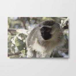 Monkey Business Metal Print