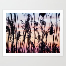 Long Point Sunset Art Print