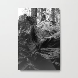 Sequoia National Park XIII Metal Print