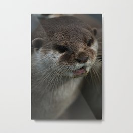 Otterly Sweet Face Metal Print