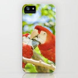 Ecuadorian Parrots Kissing at Zoo, Guayaquil, Ecuador iPhone Case