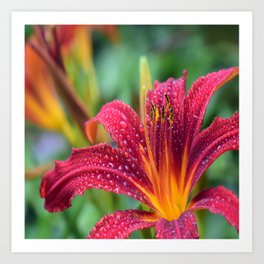 Lily Flowers Art Prints Society6