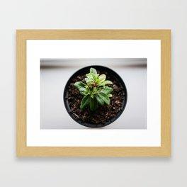 Indoor Spring Framed Art Print