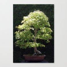 Miniature Tree Canvas Print