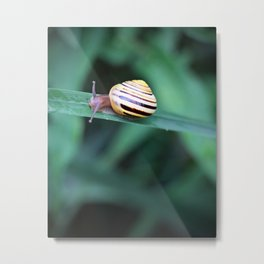 Snail in His Green Jungle Metal Print