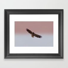 Golden Eagle Framed Art Print