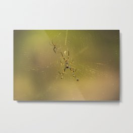 Golden orb spider Metal Print