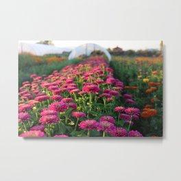 Flower Farm Metal Print