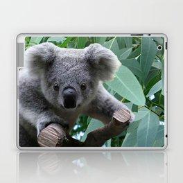 Koala and Eucalyptus Laptop & iPad Skin
