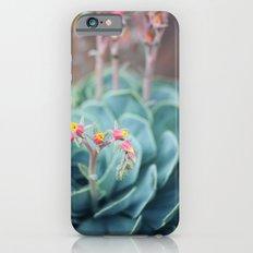 Echeveria #1 Slim Case iPhone 6s