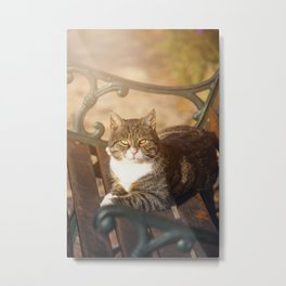 Cute cat relaxing in the sun on old bench Metal Print