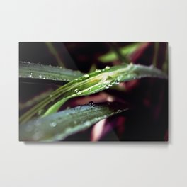 Nature - Grungy Green Metal Print