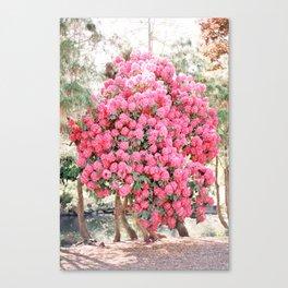 Hydrangea Bloom Canvas Print