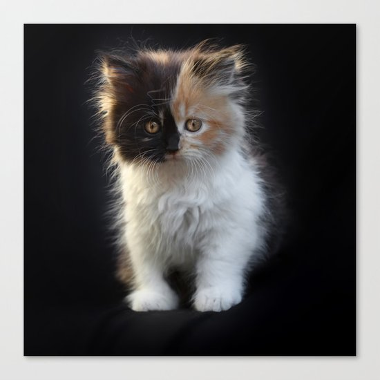 Cutest Kitten Ever Canvas Print