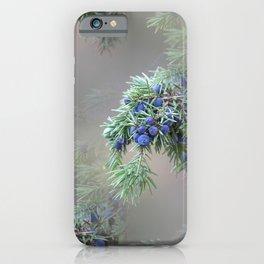Juniper berries (seed cones) iPhone Case