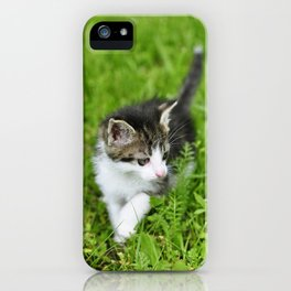 Kitten in the grass iPhone Case