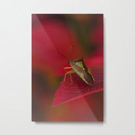 Hawthorn Shieldbug Metal Print