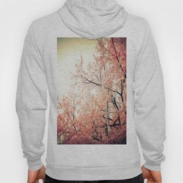 Cherry Blossom Nostalgia Hoody