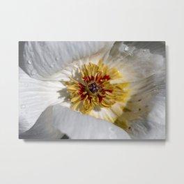 Flower / In The Garden / 1 Metal Print