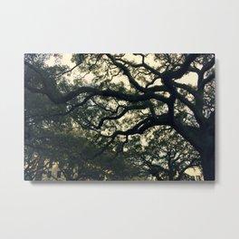 Savannah Live Oaks Metal Print