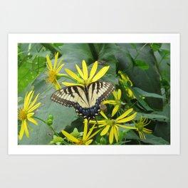 Swallowtail Butterfly in the Field Art Print
